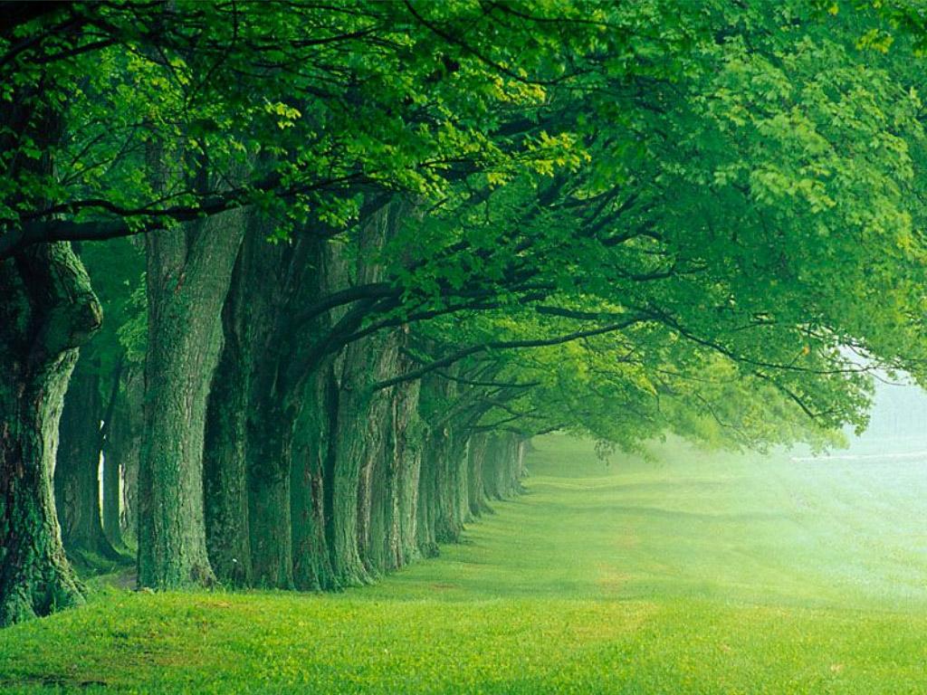 Allee_d_arbres_1024x768 dans fond ecran paysage