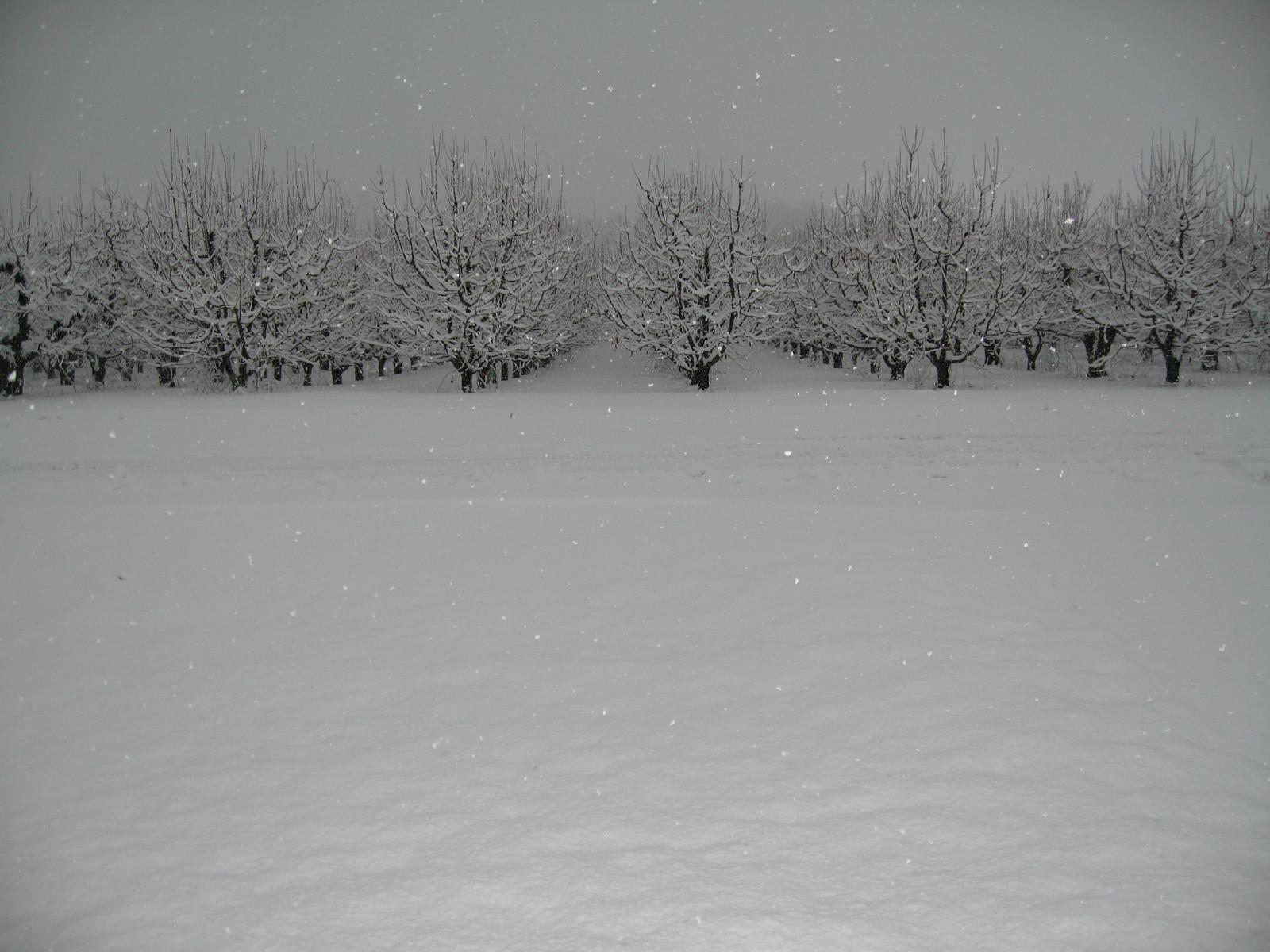 Vergers_sous_la_neige_1600x1200.jpg